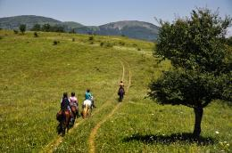 it is a time for gallop, North Balkan Mountain, Bulgaria