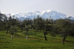 orchard garden and North Balkan Mountain on background view